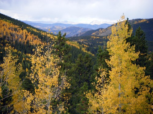 autumn aspens in CO